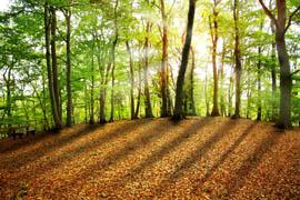 Referenzen Forstwesen